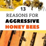 images of honey bees 13 reasons for aggressive honey bees