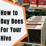 pictures of bee packages, how to buy bees for your hive