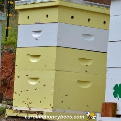 Parts of a Beehive-for Beginner Beekeepers