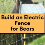 picture of a black bear with a beehive and electric fence for bears