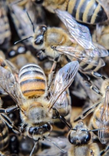 Many worker bees inside the hive image.