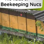 Row of nuc beehives value of bee nucs image.