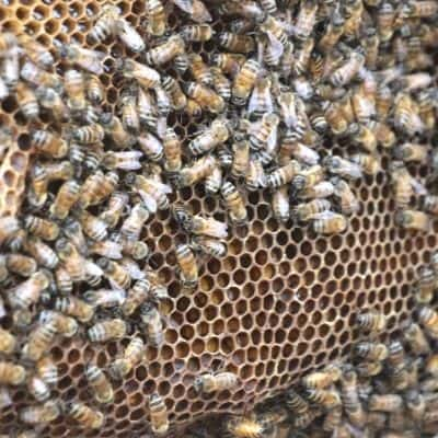 bees inside hive during winter day