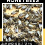 honey bees in hive - searching for the best type of honey bees