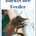 image of a honey bee drinking from feeder, how to make a bucket feeder