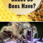 Honey bees foraging how many knees do bees have image.
