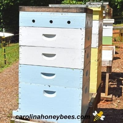 Using a fume board into remove bees from honey super during harvesting image.