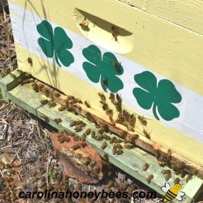 image of front of a hive inspecting only hive entrance is a mistake
