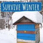 honey bee hive in Winter snow - how honeybees survive winter