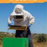 image of a beekeeper inspecting a beehive