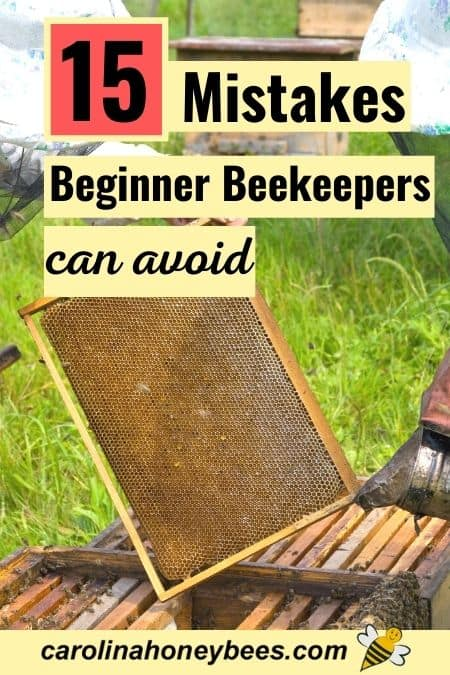 beekeeper inspecting hive frame - 15 mistakes beginner beekeepers can avoid