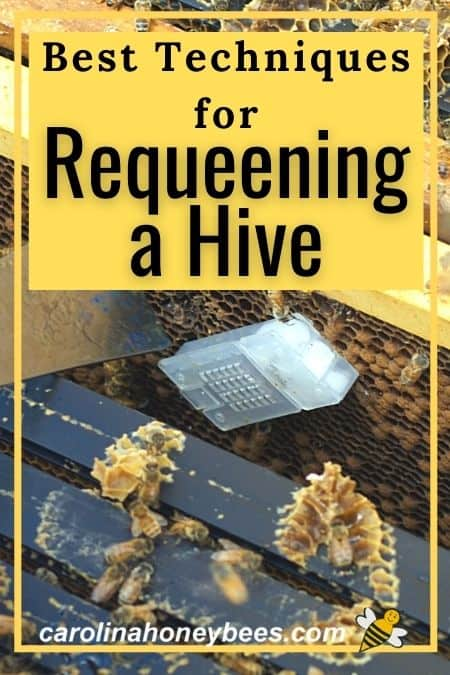 picture of queen cage in hive techniques for requeening a hive