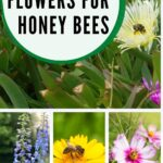 pictures of the best flowers for honey bees daisy salvia and more
