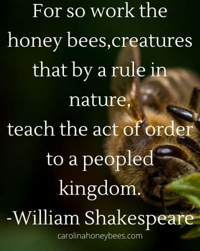 Shakespear bee quote about honey bee on flower image.