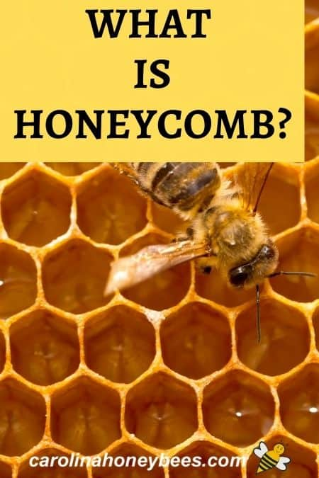 honey bee on comb - what is honeycomb