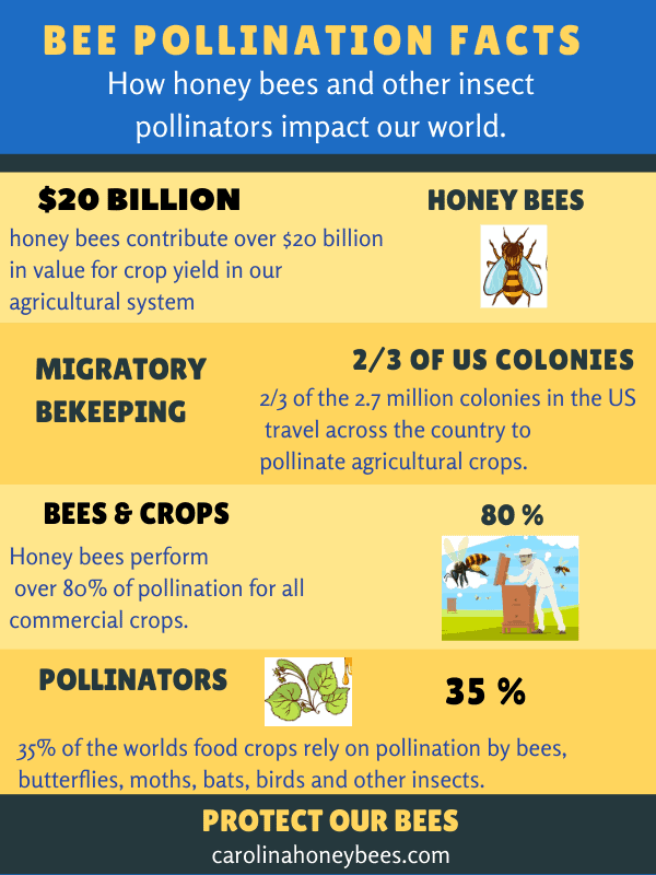 Infographic chart on bee pollination facts image.