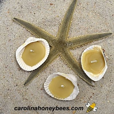 DIY Seashell Candles with Beeswax