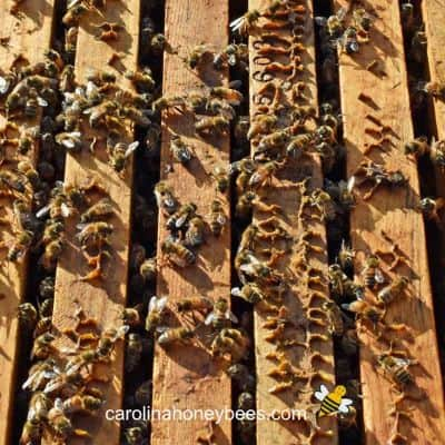 What is Burr Comb – Is it a Problem?