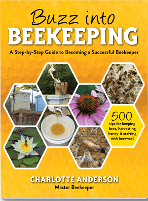 front cover of buzz into beekeeping