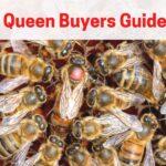 queen bee surrounded by attendants - buying a queen bee = queen buyers guide
