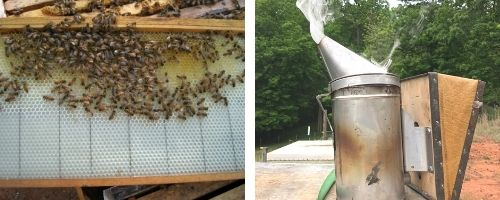 bees on a frame and a bee smoker