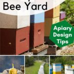 How to set up your bee yard with beehive images.