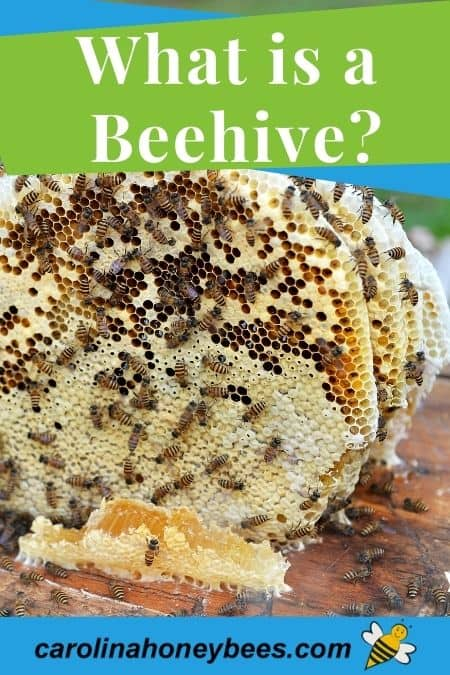 Beehive family on sheets of comb what is a beehive image.