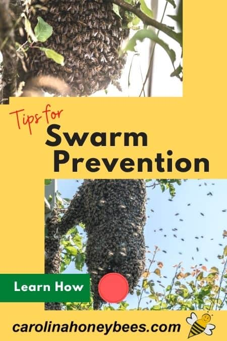 pictures of swarms of honey bees - tips for swarm prevention in bees