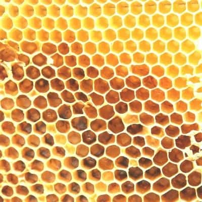 picture of beeswax honey comb inside a bee hive