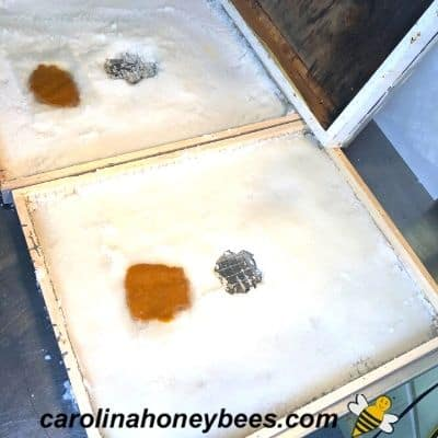 No-Cook Candy Board for Bees