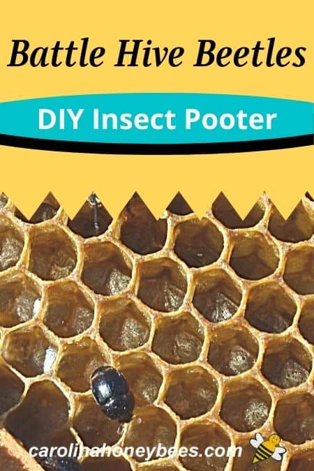 picture of small hive beetle - battle hive beetles - diy insect pooter