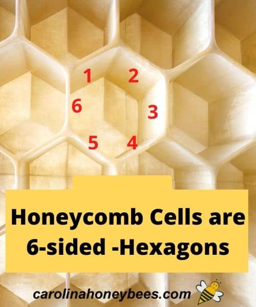 Honeycomb bees wax cell - honey comb cells are 6 sided hexagons image.