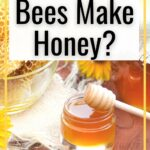 honey and honeycomb - how do bees make honey