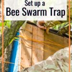 beekeeper with swarm trap in tree - how to set up a bee swarm trap