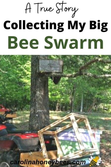 equipment for collecting bee swarm from bait hive box