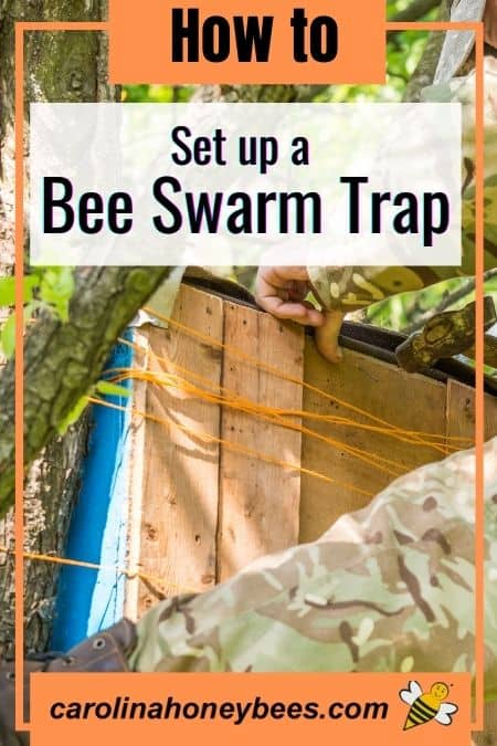 picture of a beekeeper with swarm trap in tree, how to set up a bee swarm trap