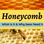 honeycomb beeswax and bees - what is honeycomb