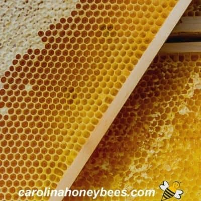 frames of ripe bee honey comb from a hive