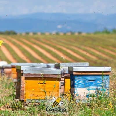 image of hives in a farm field providing important pollination service