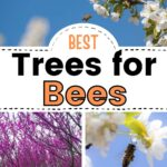 Various flowering trees for bees image.