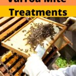 Beekeeper using varroa mite treatments on beehive image.