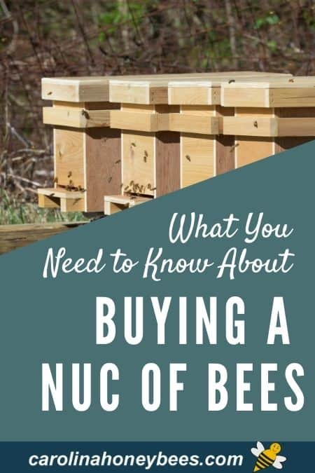 image of bee nucs - what you need to know about buying a nuc of bees