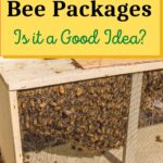 Package of honey bees in box buying bee packages is it a good idea image.