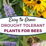 image of drought tolerant plants for bees