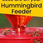 Honey bees drinking from red hummingbird feeder image.