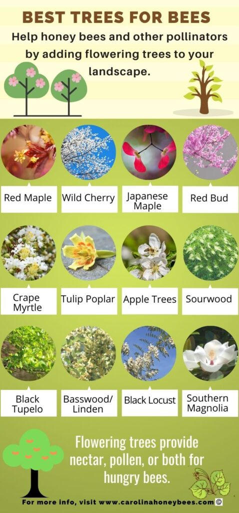 infographic image - best flowering trees for bees - picture of bee trees with their names.  Trees provide nectar, pollen or both for bees.
