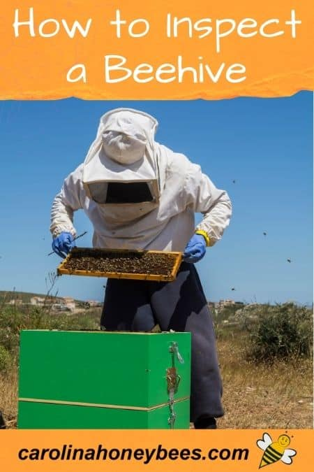 image of beekeeper inspecting a colony of bees