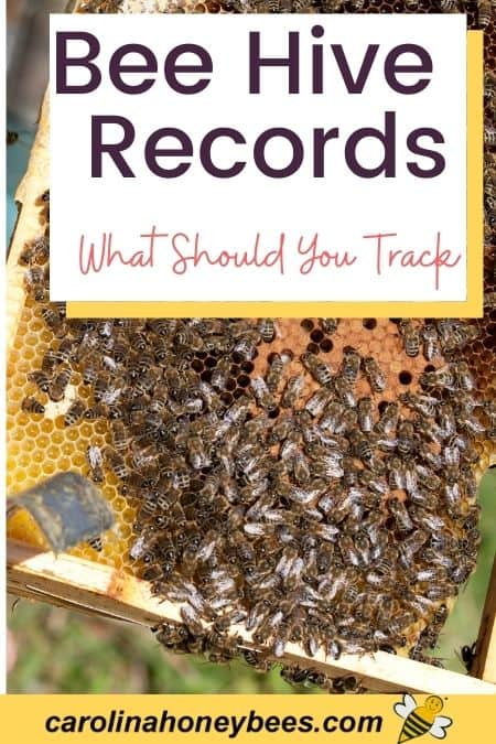 image of bees in a hive - bee hive records