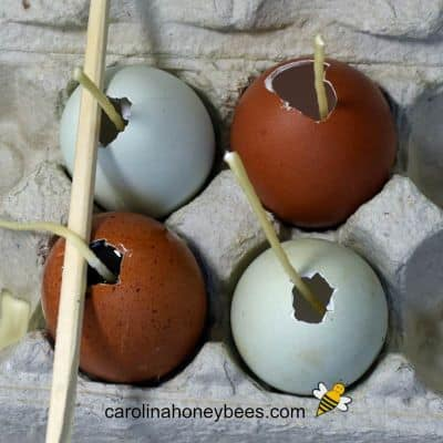 How to Make Egg Shaped Beeswax Candles