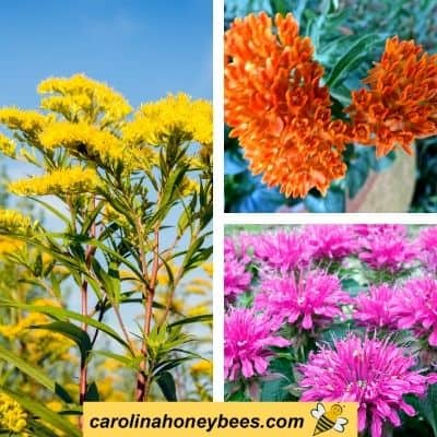 picture of goldenrod, bee balm and butterfly weed drought tolerant bee plants